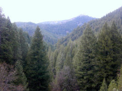 250pxconifer_forest_2